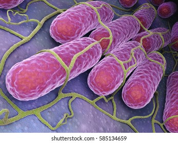 Culture of Salmonella bacteria.3 D illustration