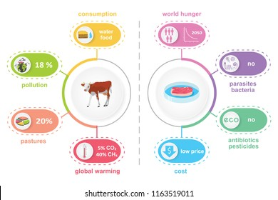 Cultured lab-grown meat infographics. Comparison of synthetic in vitro food and beef. Biotechnological industry and ecological concept. Color flat illustration