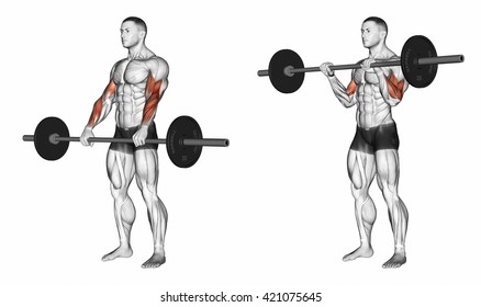 Curl with a barbell grip on top. 3D illustration