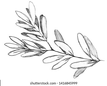 Customized Olive branch hand drawn with pencil frame or wreath. Have empty space for text. Plain and sweet grayscale design for postcards, save the date cards, wedding or birthday invitations, blog