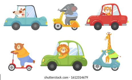 Cute animals on transport. Animal on scooter, driving car and zoo travel. Dog, elephant and tiger transportation vehicle drivers character. Cartoon isolated  illustration icons set