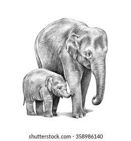 A cute baby Asian elephant with its mother in a hand drawn pencil sketch illustration isolated on a white background. These large zoo animals have big ears and a trunk with wrinkled skin.