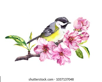 Cute bird in cherry blossom, sakura flowers in spring time. Watercolor twig