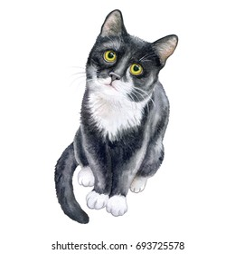 Cute black cat isolated on white background. Watercolor. Stock Illustration Template. A realistic kitten. Template
