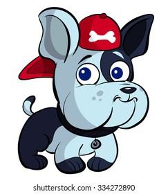 cute bulldog with cap