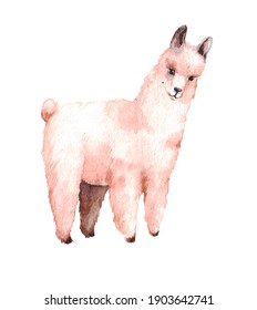 cute cartoon pink llama on a neutral background. watercolor illustration for nursery or pet print