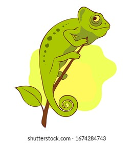 Cute chameleon on the branch. Hand drawn illustration