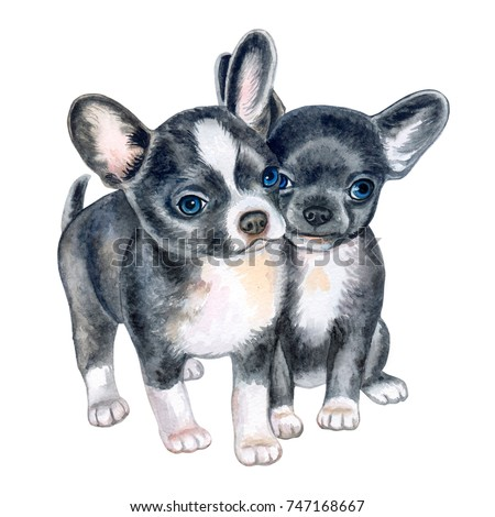 Cute Chihuahua Puppies Isolated On White Stock Illustration