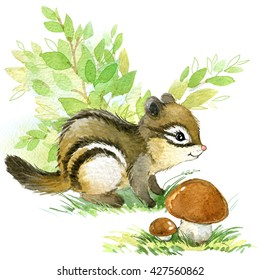 Cute chipmunk. watercolor forest animal illustration.