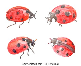 cute collection of ladybugs. watercolor painting