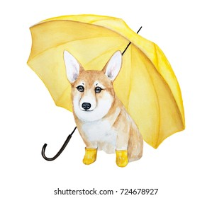 A cute corgi dog with big brown eyes in yellow rubber boots under a yellow umbrella. Watercolor illustration isolated on a white background.