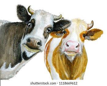 Cute cows watercolor illustration isolated on white