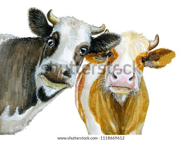 Cute-Kuh-Aquarelluchte einzeln auf Weiß