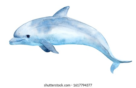 Cute dolphin. Watercolor illustration. Isolated on a white background.