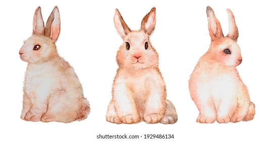 Cute easter bunnies set. Watercolor illustration. Perfect for invitations, greeting cards, posters. Happy easter