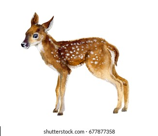 Cute fawn. Deer. watercolor illustration. Forest animal