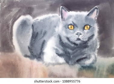 Cute Fluffy Favorite British Cat With Beautiful Honey Eyes Sitting Bent Legs On A Colored