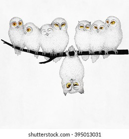 Cute fluffy owls sitting on a branch