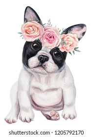 Cute french bulldog puppy in wreath of roses. Hand drawn watercolor