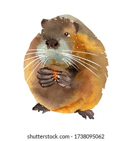 Cute funny brown muskrat nibbles food. Watercolor illustration isolated on a white background