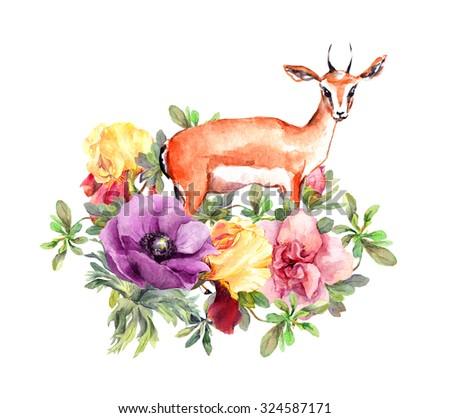 gazelle wild rose