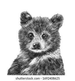 Cute hand drawn bear portrait. Nursery poster