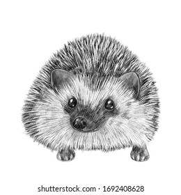 Cute hand drawn hedgehog portrait. Nursery poster