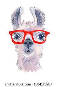 Cute hand drawn llama in bright glasses. Funny animal. Woolen Alpaca from Mexico. Travel. For projects, baby showers, wedding invitations, cards, posters and more.
