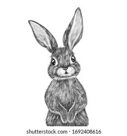Cute hand drawn rabbit portrait. Nursery poster