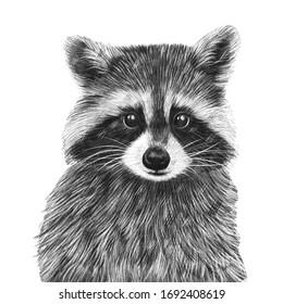 Cute hand drawn racoon portrait. Nursery poster
