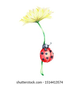 Cute ladybug and yellow flower; watercolor hand draw illustration; with white isolated background