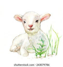 cute little lamb on white background watercolor illustration