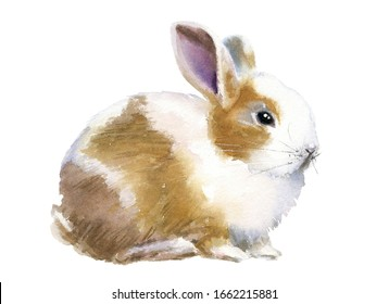 Cute little watercolor bunny in realistic style, lovely Easter pet with funny long ears. Great for Easter's cards, invitations, children prints, stickers for zoo and nature lovers and farmers.