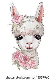 cute llama, white llama with flowers, childlike illustration, animal print on clothes.  wild animals on a white background
