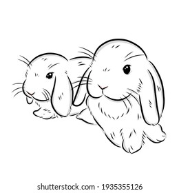 cute holland lop drawing illustration on white background