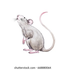 Cute mouse, hand drawn watercolor illustration