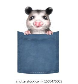 Cute opossum on pocket. Isolated on white background