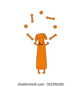 Cute orange colored brown contoured dachshund with protruding tongue, one eye closed and one opened standing on hind legs and juggling bones and balls forelegs. Vector flat style illustration