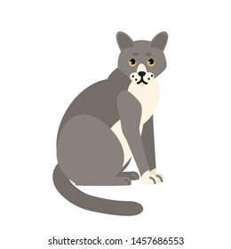 Cute pensive grey cat isolated on white background. Funny domestic animal or pet. Adorable sitting kitty or pussycat, lovely furry friend. Colorful illustration in flat cartoon style