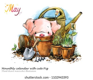 Cute pig hand drawn watercolor illustration. Mounth.ly calendar with piglet. May