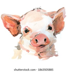 Cute pig watercolor illustration. baby animals series