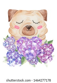 Cute pug dog with hortensia bouquet. Watercolor hand drawn pug dog illustration series
