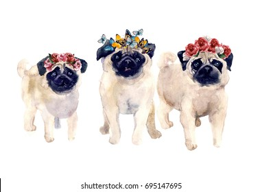 Cute pug dogs with flower and butterfly on the white background