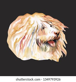 Cute Puli Cartoon Dog. Watercolor illustration of purebred puli dog.