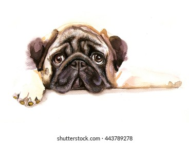 Cute puppy pug dog with sad eyes. Watercolor painting on the white background. Useful for card, poster, domestic animals illustration, advertising of pets products.