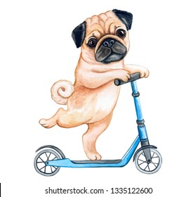 Cute Puppy pug  on a scooter isolated on white background. Watercolor. Illustration. Template. Image. Picture. Hand painted