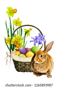 Cute rabbit near a wicker basket with colorful decorated eggs and blubells and yellow narcissi in the background hand drawn in watercolor isolated on a white background. Wonderful Easter arrangement