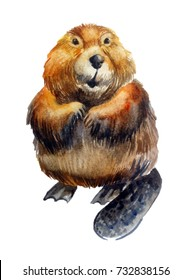 cute realistic beaver on a white background. watercolor illustration. forest animal