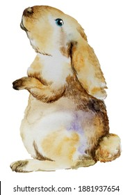 cute realistic gray rabbit on a neutral background stands on its paws. watercolor illustration of animals. print