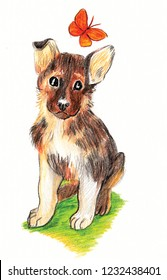 Cute Shepherd puppy and butterfly. drawn in pencils. for decoration and illustration for children.
